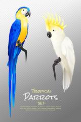 Realistic Tropical Parrots Set