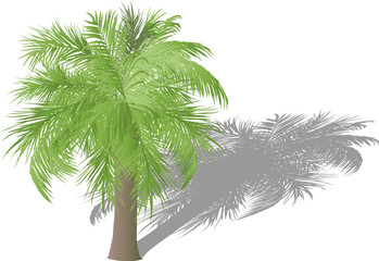palm with lush light leaves and shadow illustration
