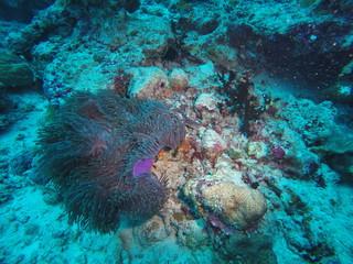 Coral reef at the Maldives