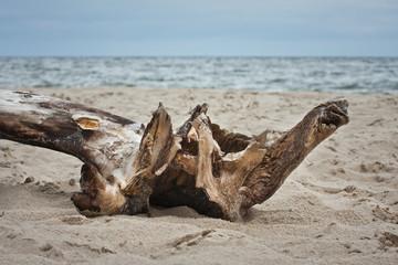 Konar na bałtyckiej plaży