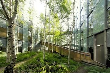 Birkenbäume in einem Innenhof