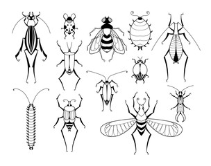 Different insects with patterns on wings. Butterflies and bugs set. Vector biology illustrations