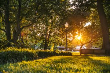 Atardecer en el parque / Sunset at park
