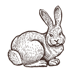 Farm rabbit animal sketch, isolated farm on the white background. Vintage style bunny. Vector illustration.
