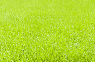 lush green grass background