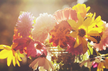 Bunch of colorful flowers in soft sun lights