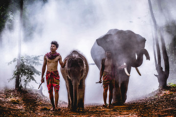 An elephant mahout and elephant walking through the haze in the jungle. Lifestyle of surin elephants village.