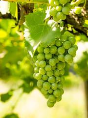 Weinanbau in Südtirol