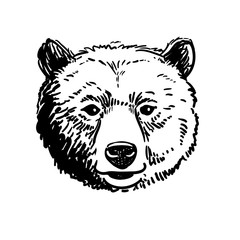 Vector pen and ink hand drawn illustration of a bear head portrait facing forward. Retro vintage style sketch nature wildlife design element .