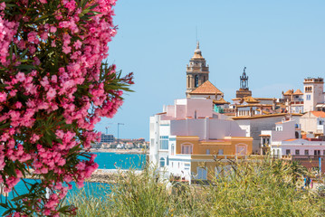 Blooming Oleander against the background of the historical center in the Sitges, Barcelona, Catalunya, Spain. Copy space for text. Isolated on blue background.