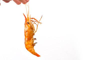 One grilled shrimp on white background