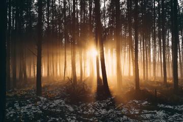 Sonnenuntergang und Nebel im Wald in Norddeutschland
