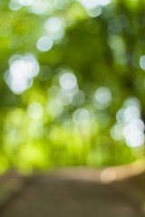 Blurry nature wallpaper. Forest bokeh background. Vertical defocused backdop.