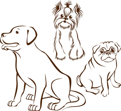 Set of dogs breeds