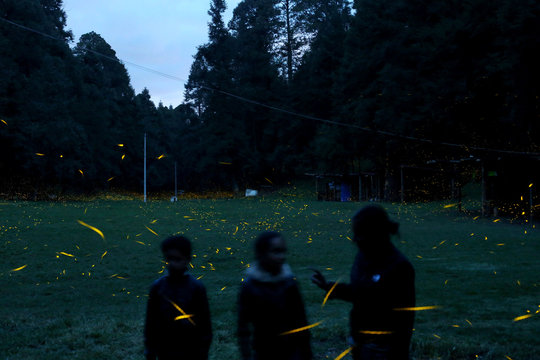 Fireflies seeking mates light up in synchronised bursts as tourists look at them from inside a forest at Piedra Canteada sanctuary near the town of Nanacamilpa