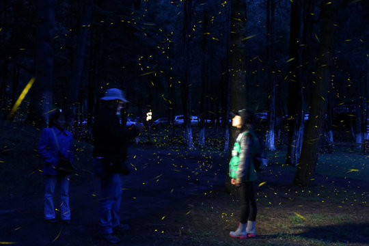 Fireflies seeking mates light up in synchronised bursts as a cameraman talks to a tour guide inside a forest at Piedra Canteada sanctuary near the town of Nanacamilpa