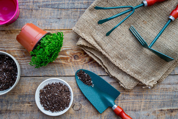 Planting flowers. Gardening tools and pots with soil on wooden background top view