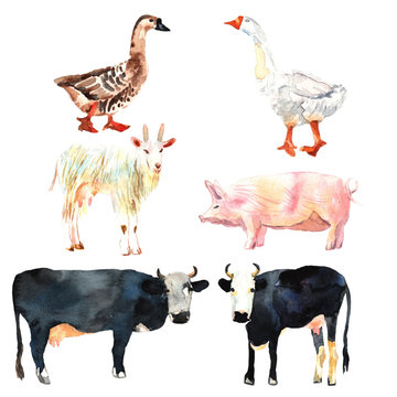 Farm animal set drawing in watercolor. Cow, duck, goat, pig.