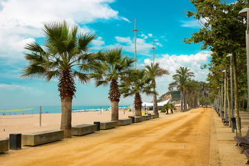 Palm trees on beach promenade in Calella on Costa Brava Spain. Wall mural