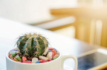 Cactus decorated in a coffee shop