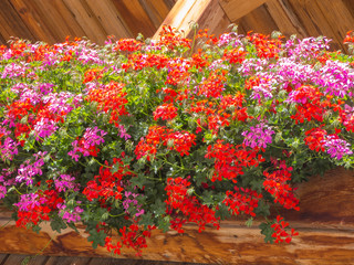 Terraces decorated with mountain flowers