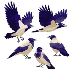 Crows on white background / There are three sitting crows and two flying crows in cartoon style