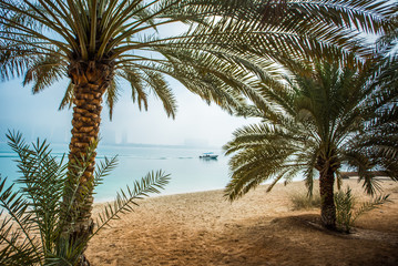 Palm tree, exotic beach