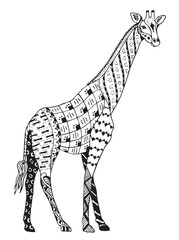 Giraffe zentangle stylized, vector, illustration, freehand pencil, hand drawn, pattern.