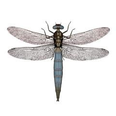 Dragonfly - 3D render