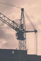 Crane gray on a background of clouds contrasting