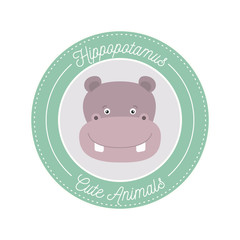 white background with color frame decorative and face hippopotamus cute animals text vector illustration