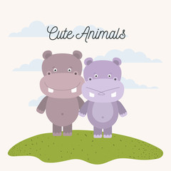 white background with color scene couple cute hippopotamus animals in grass vector illustration