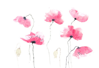Red poppy flowers on white