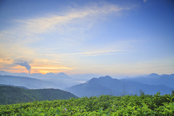 A view of the sunrise in the Cukul Tea Plantation, Bandung, Indonesia.