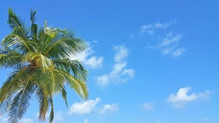 P00763 Maldives white sandy beach coconut palm trees on sunny tropical paradise island with aqua blue sky sea ocean 4k