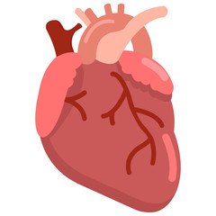 Human heart organ icon, vector illustration flat style design isolated on white. Colorful graphics