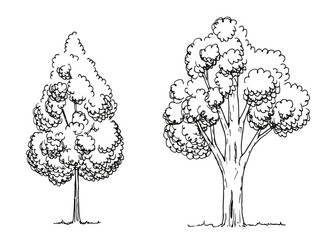 trees hand-drawing. vector illustration