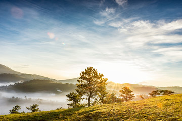 Majestic foggy mountain with green tree in the sunlight