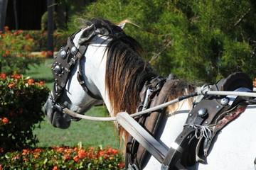 Pferd an einer Pferdekutsche