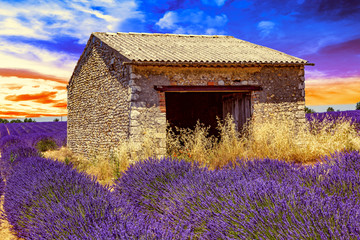 Fond de hotte en verre imprimé Prune Lavender field with old ruins