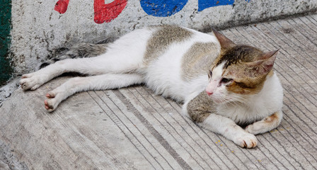 A cat relaxing on the road