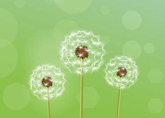 Dandelion. vector illustration