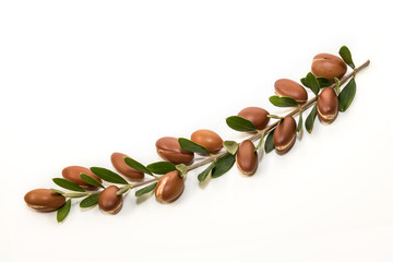 Argan branch