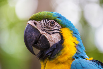 face of a blue and gold macaw bird with stunning markings