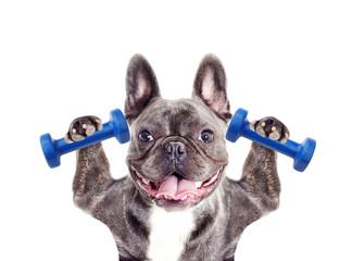 Dog athlete bodybuilder