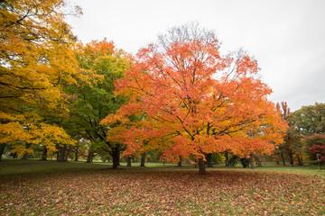 Big beautiful tree in fall