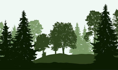 Vector illustration of a deciduous and coniferous forest in several layers, isolated on a white background
