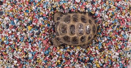Turtle on the sand