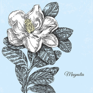 Vintage background with a beautiful magnolia flower. Vector or illustration.