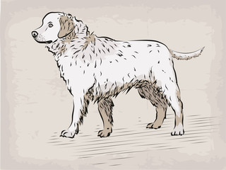 Dog Labrador retriever beautiful serious animal pet hand drawn in pastel colours, black line funny illustration isolated beige background. Vector beautiful design element drawing.